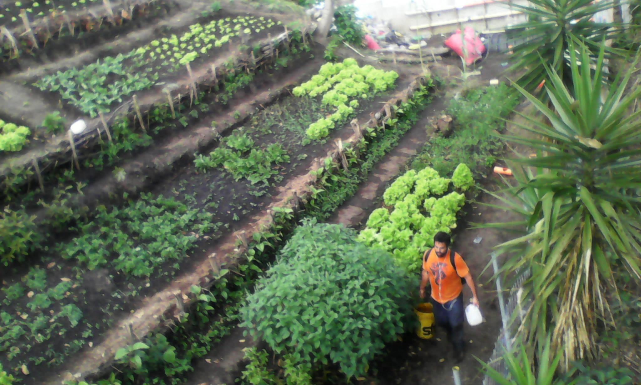 Garden Fincas Buenas.jpg