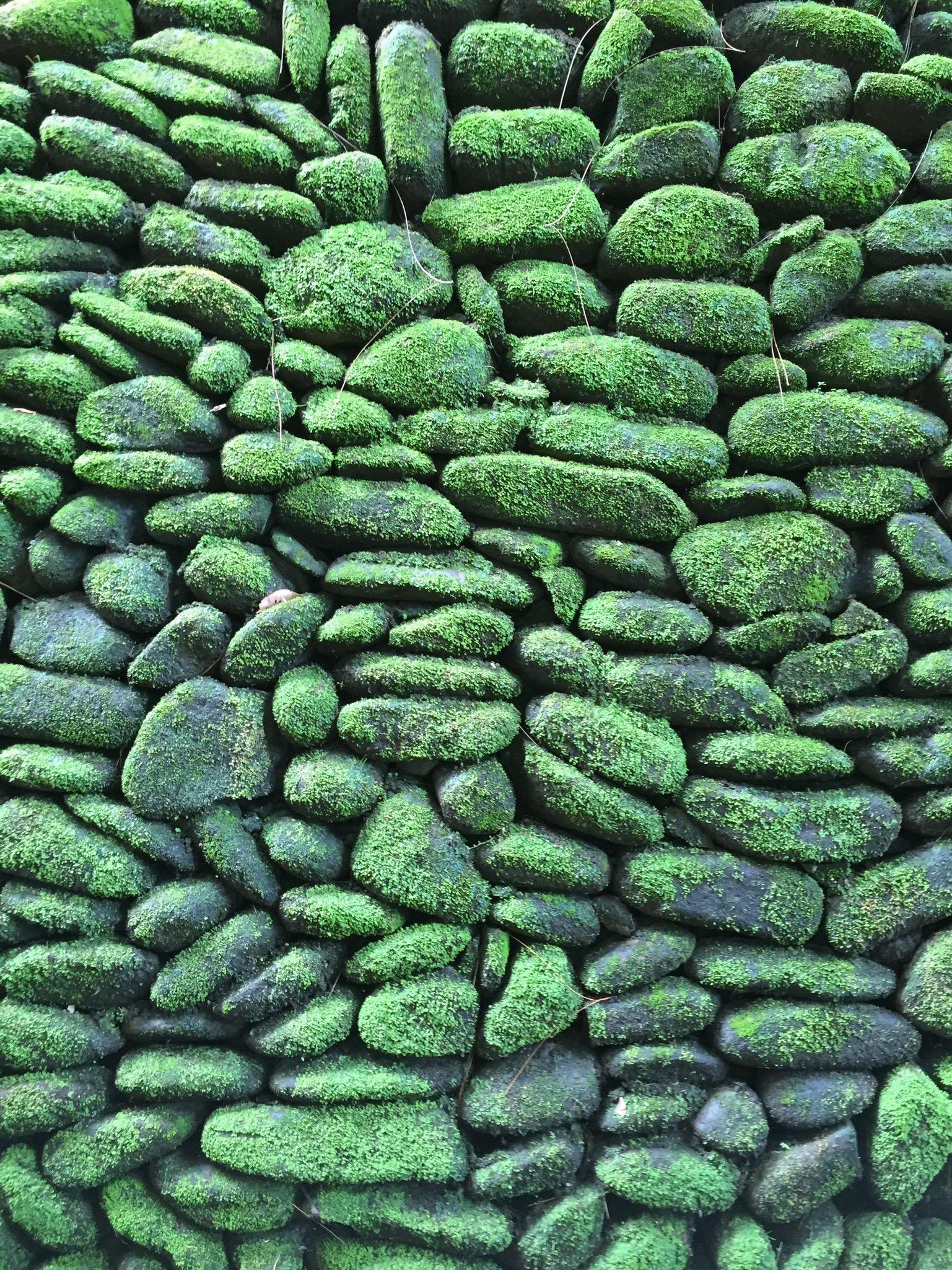 Moss covered rock wall at Tirta Empul healing waters temple.