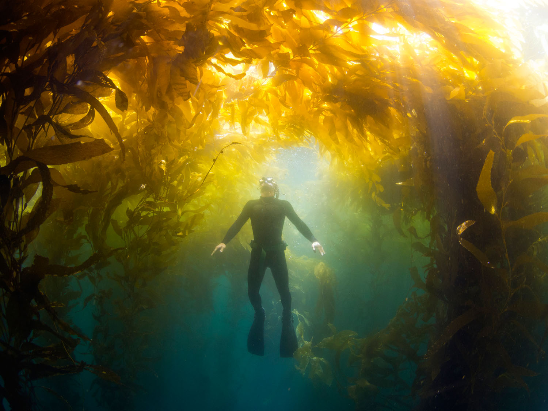 freediving-golden.jpg