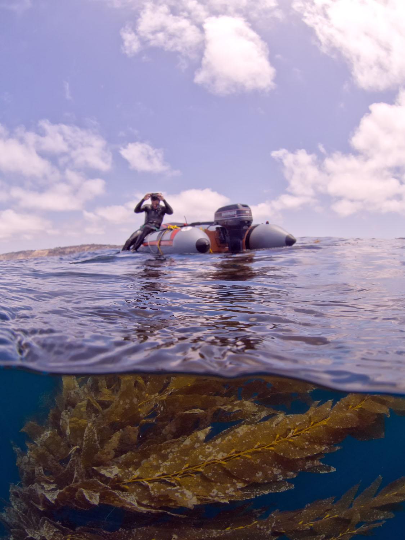 kelp-and-clouds.jpg