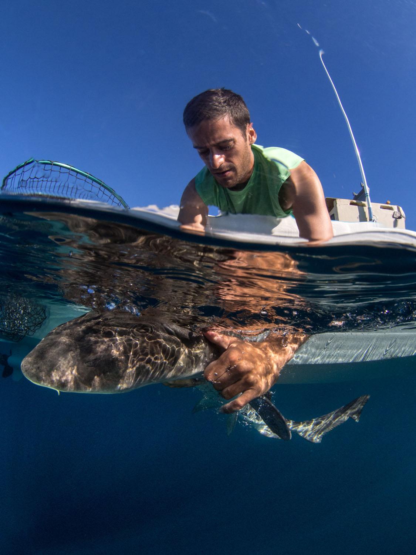 leopard-shark.jpg