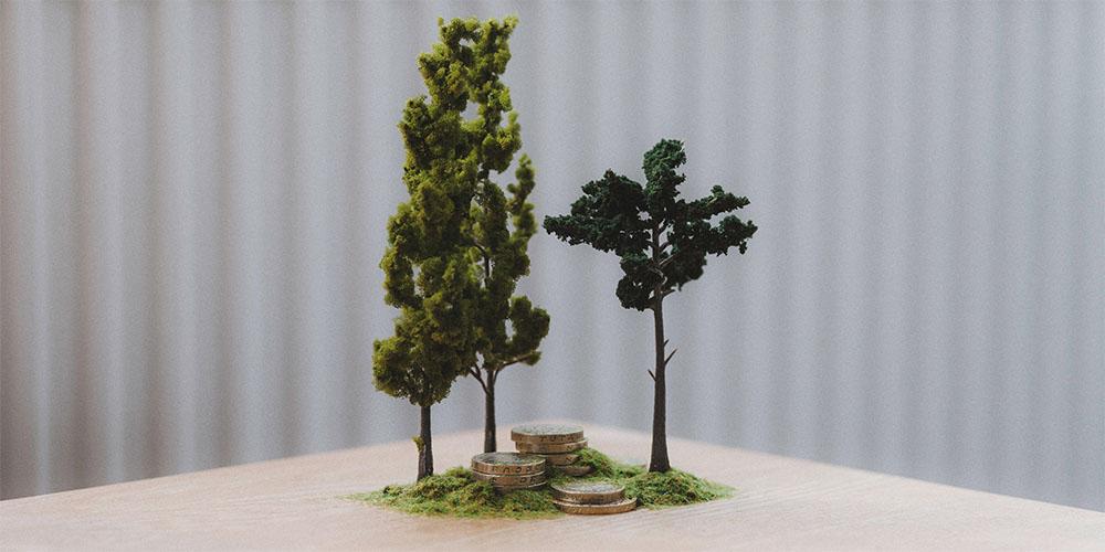 WebsetW TREES SML 01 tomsimmonds_0003_Trees 1 XXL_0004_Tree 0002.jpg