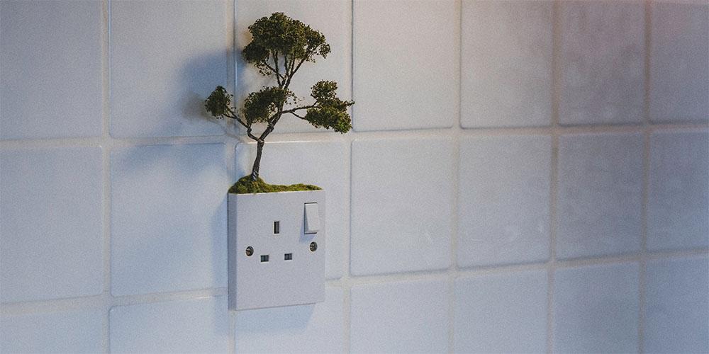 WebsetW TREES SML 01 tomsimmonds_0006_Trees 1 XXL_0000_Tree 0006.jpg