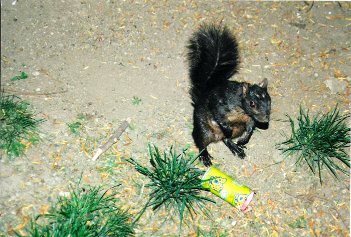 nysquirrel_post.jpg