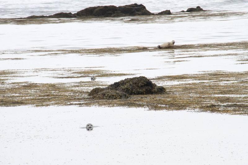 seal beach Iceland