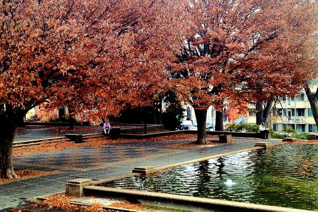 """Two men reading, Meridian Hill Park, Washington D.C."" by Erin Johnson"