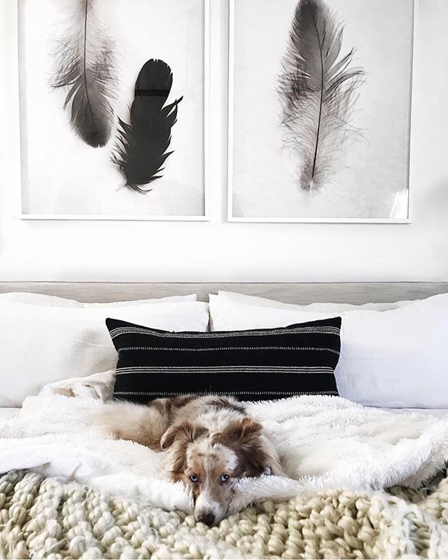 "Cozy Sundays 🐶😴 @eatsleepwear's bedroom featuring our two feather prints ""Hopeful Crow No. 5"" and ""Duet No. 1"" by @featherphotographer. Design @citysage"