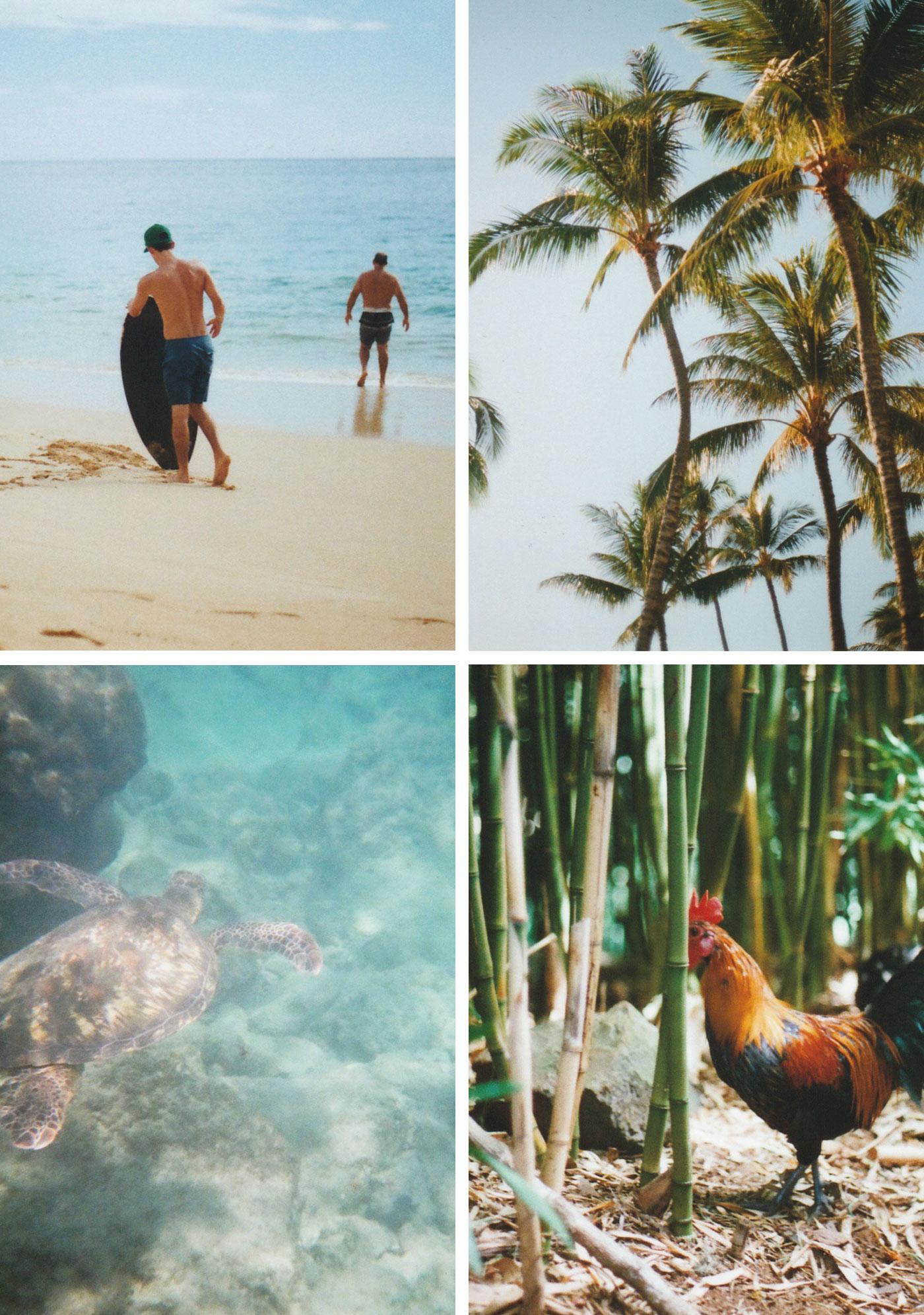 hawaii_collage_2.jpg