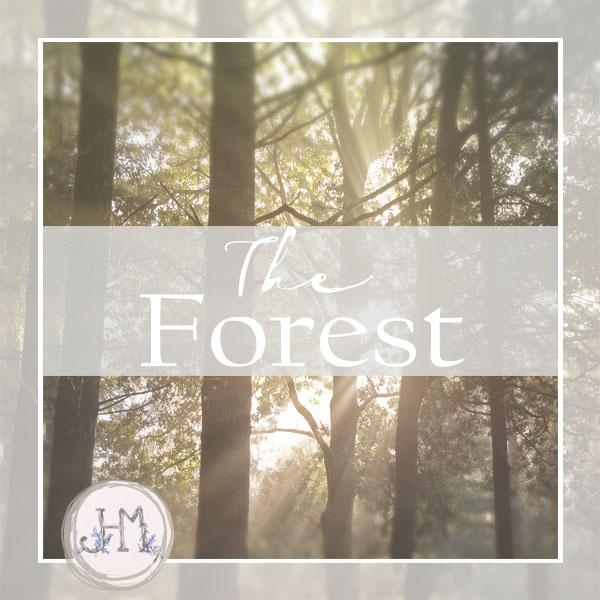 pinterest board cover the forest.jpg