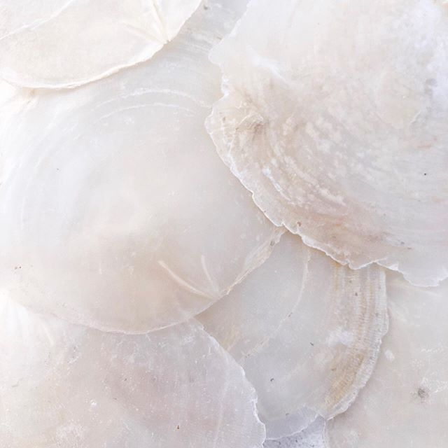 Nature does the most beautiful neutrals! Shimmery and ethereal capiz shells making my mind wander with the most lovely ideas. . . . . . . . . . . . . . #capizshells #capiz #capizshell  #thisishowihueit #neutral #neutrals  #neutraltones #minimalexperience #neutralpalette #agameoftones #minimalcolors #beachy #bohodecor #beachhouseinspiration  #minimalism #keepitsimple #minimal #minimalobsession #minimalmood #minimalhunter #mnml #soulminimalist #curated_minimal #tranparent #whiteonwhite