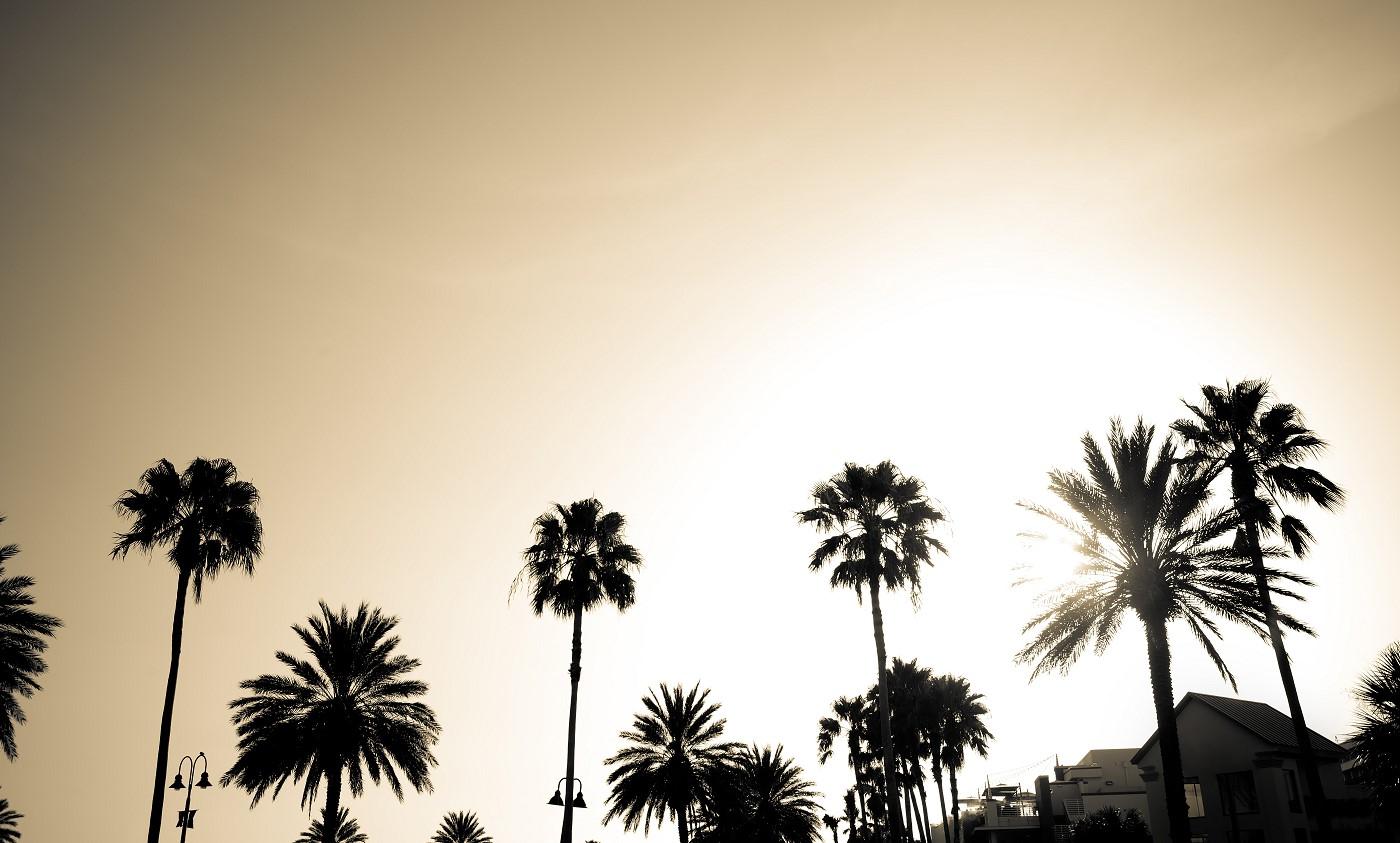 Palm Trees by Storyblocks S.jpg