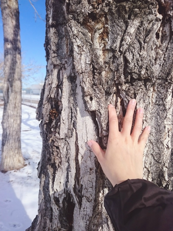 touch a tree