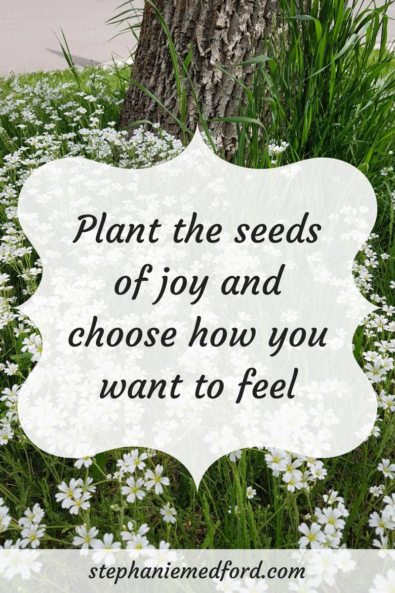 Seeds of joy.png