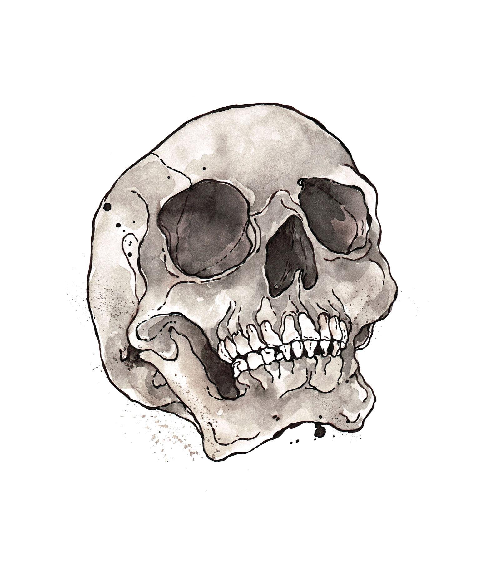 Skull Study, SCA Graduation, 2014