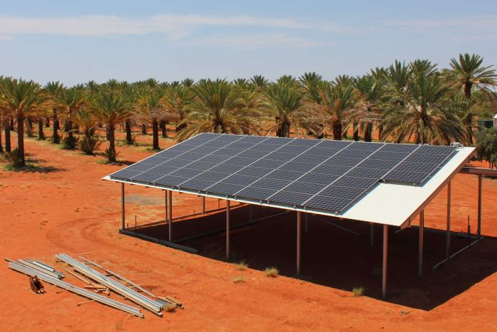 Around 700 date palms at the Tamara Cooperative are watered by a bore powered by 18-kilowatt solar panels.   Picture: courtesy of ABC Rural: Katrina Beavan
