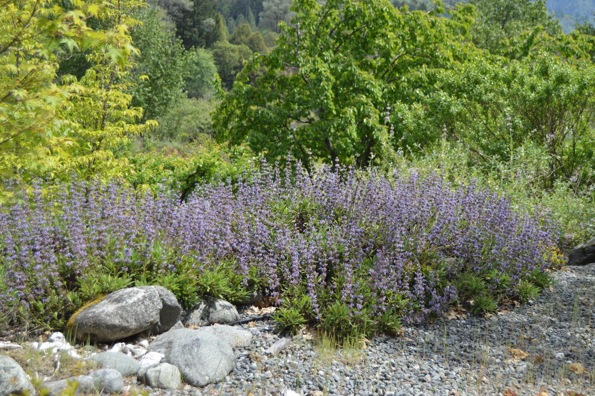 Briar Patch Natural Landscape