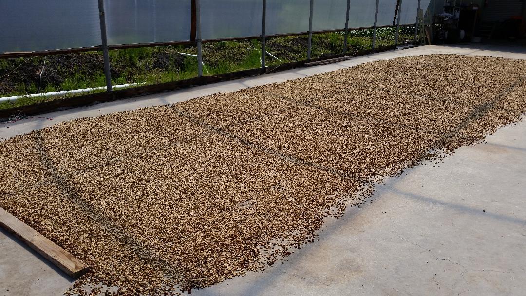 thumbnailWUZM9Q2Y-parchment drying over concrete 2.jpg