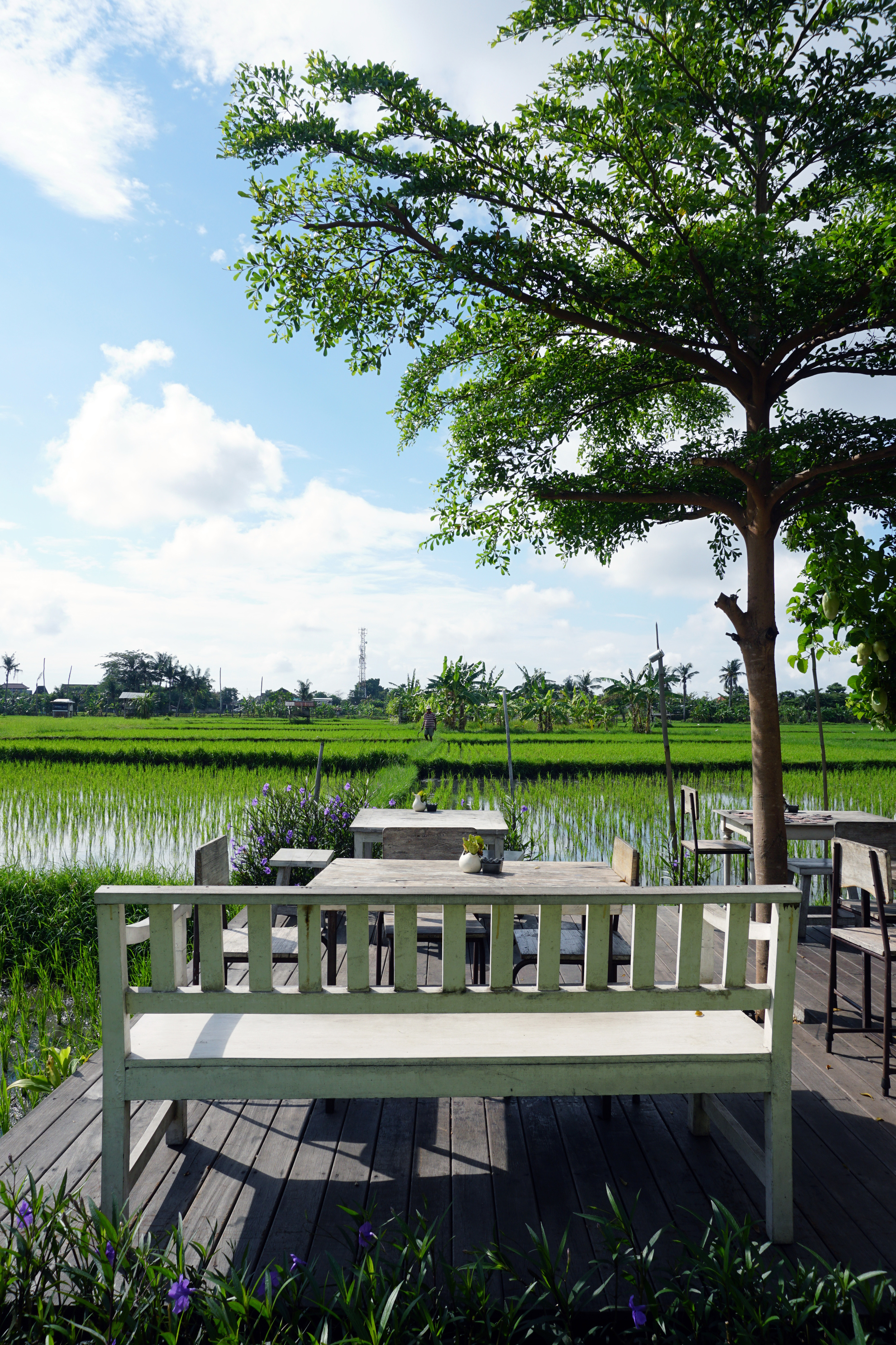 Amidst rice fields at Nook