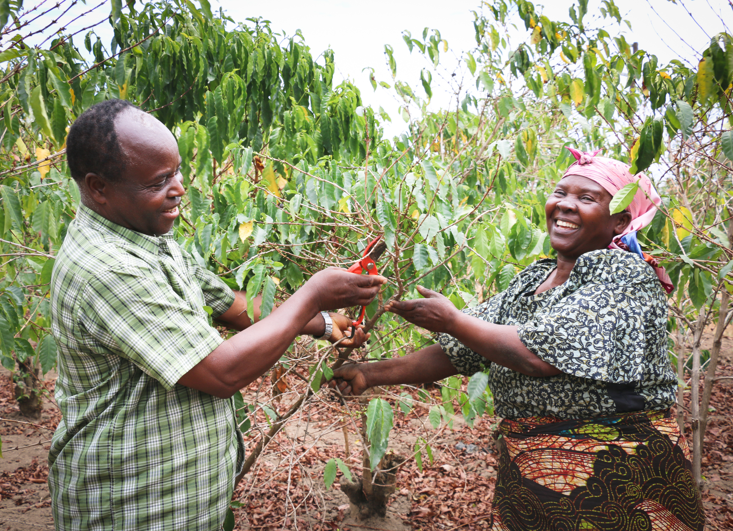 We buy in  micro-lots  from small holder farmers from the major coffee producing regions of Tanzania such as  Mbeya, Mbozi, Mbinga, Kilimanjaro and Kigoma.  At Ridge Cafe, we know how hard our farmers work to bring you quality coffee beans and we want to showcase each farmer's story. Our buying process is  transparent  and we are able to trace the beans we buy to each cooperative. Each time we get a new crop, we will showcase their stories here so watch this space!