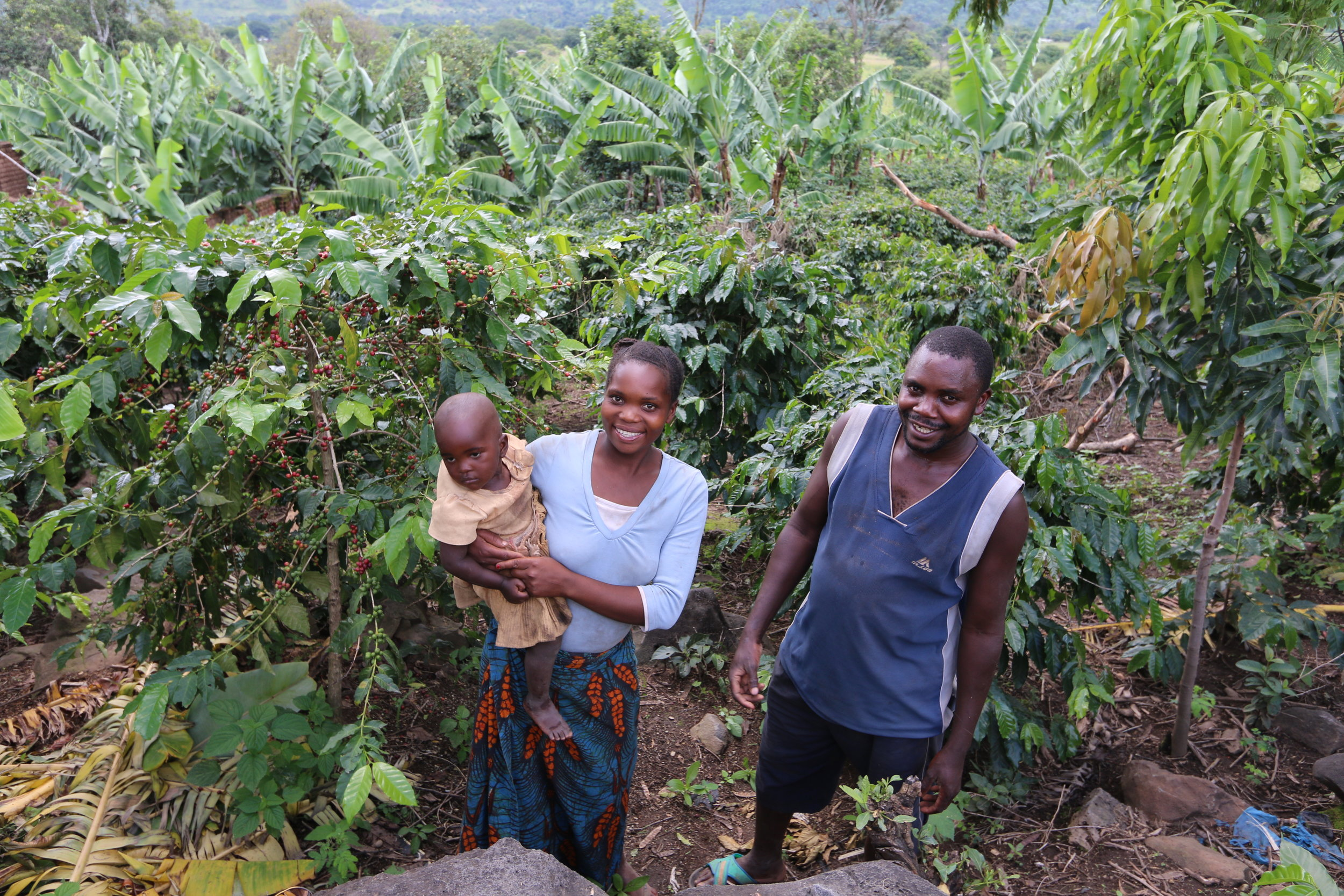 This is Simon with his wife and daughter. He lives in Wambilo, a sub-village of Utengule-Usongwe. With the help of his wife, he has been growing and selling coffee for the past seven years.Each year, he gets an average of two tons from his farm and he processes it at home. With each coffee harvest, he is able to afford necessities for his family and send his children to school (his elder children were at school at the time of this visit).  We will be having a tasting session at The Ridge Cafe in Mbeya in April and we will be inviting Simon and his family as well so they can see the end product of their labour. In the meantime, come and enjoy his coffee at the cafe! Stay tuned for dates for the tasting session.
