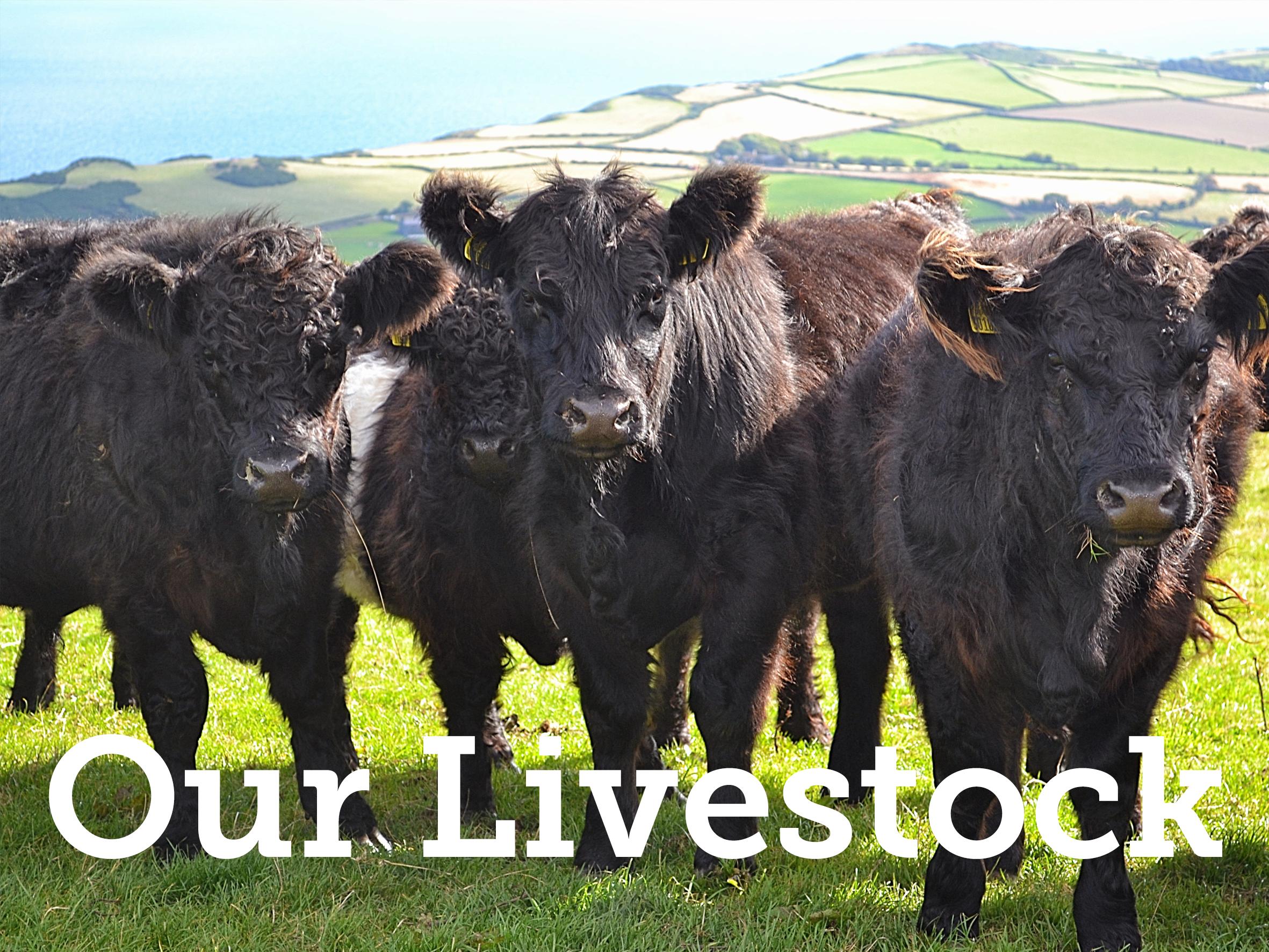 livestock_text.png