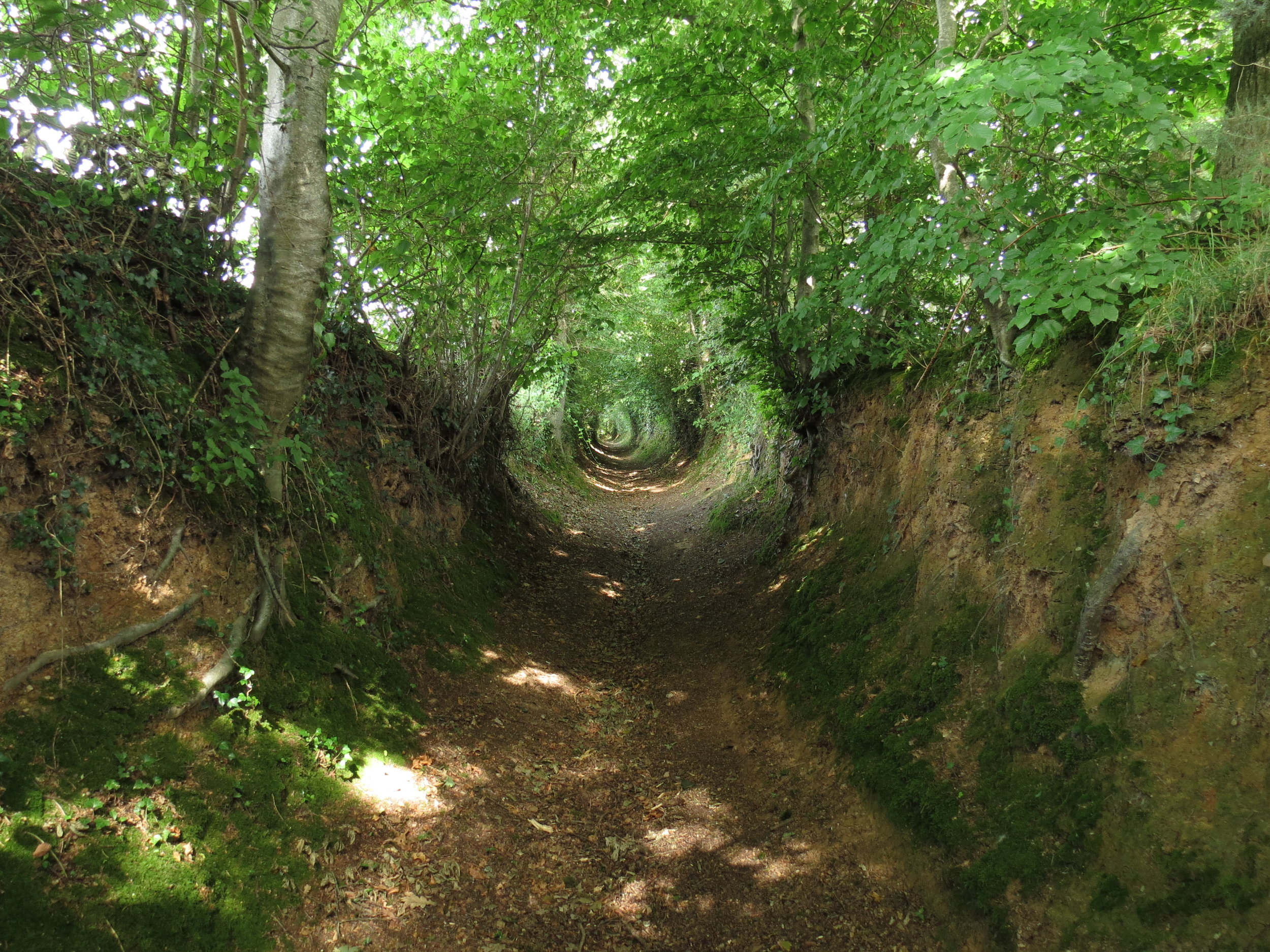 Holloways were created from thousands of journeys along one path ( Image from Wikipedia ). In a similar way, repeated actions create and strengthen neural pathways in the brain to form habits.