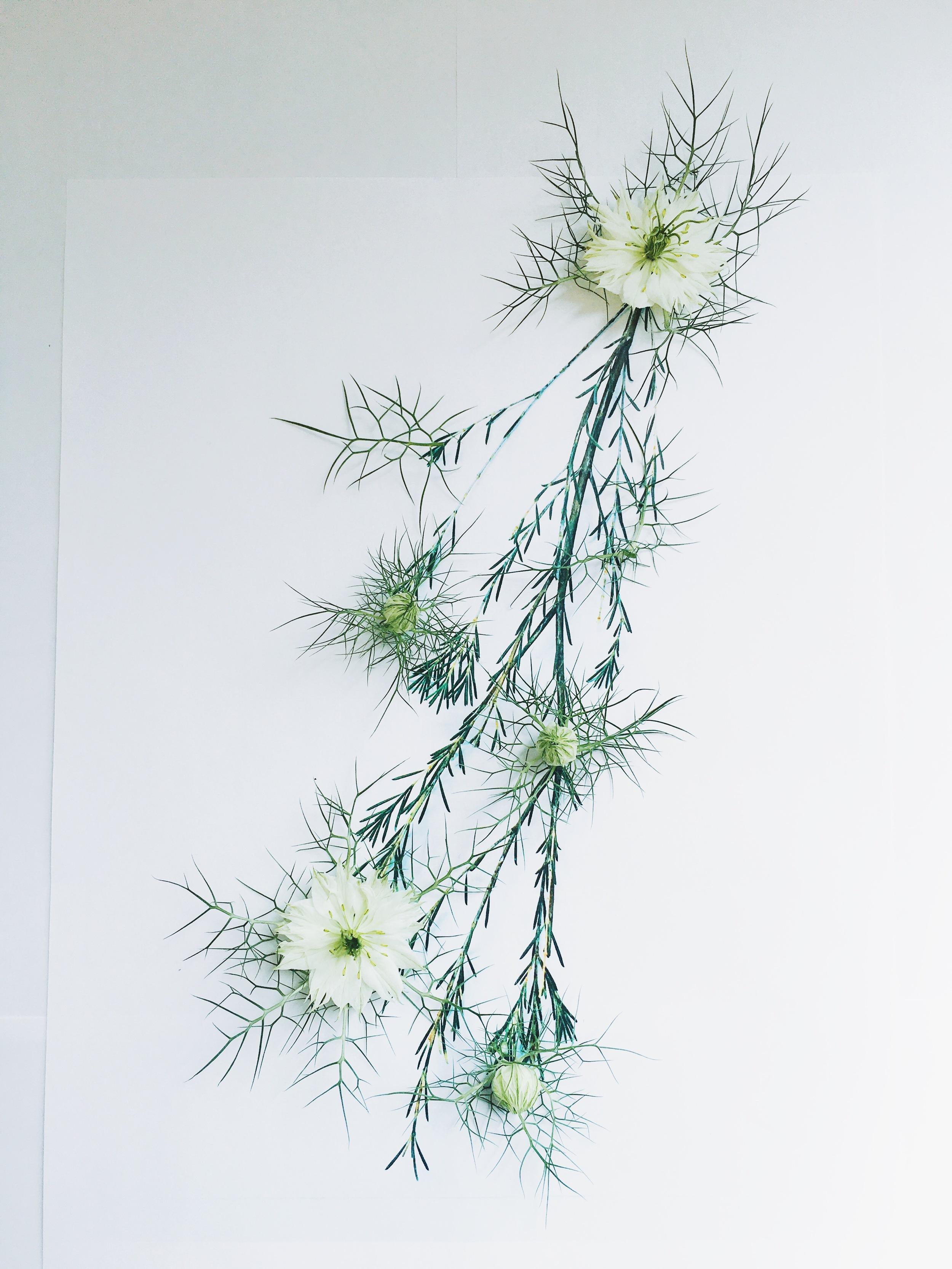 Cindy Lin Flower Drawing 5.2.jpg