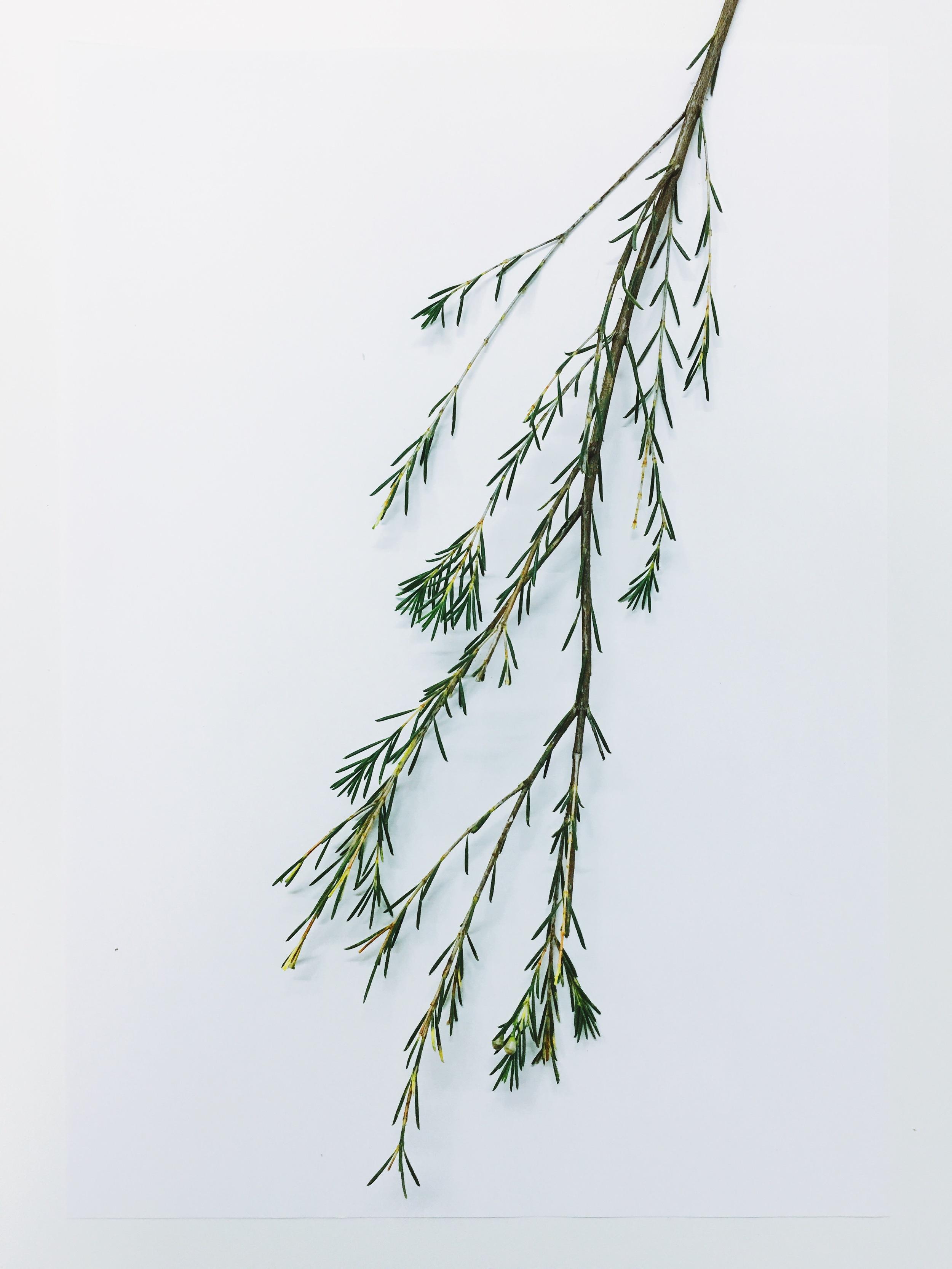 Cindy Lin Flower Drawing 5.jpg