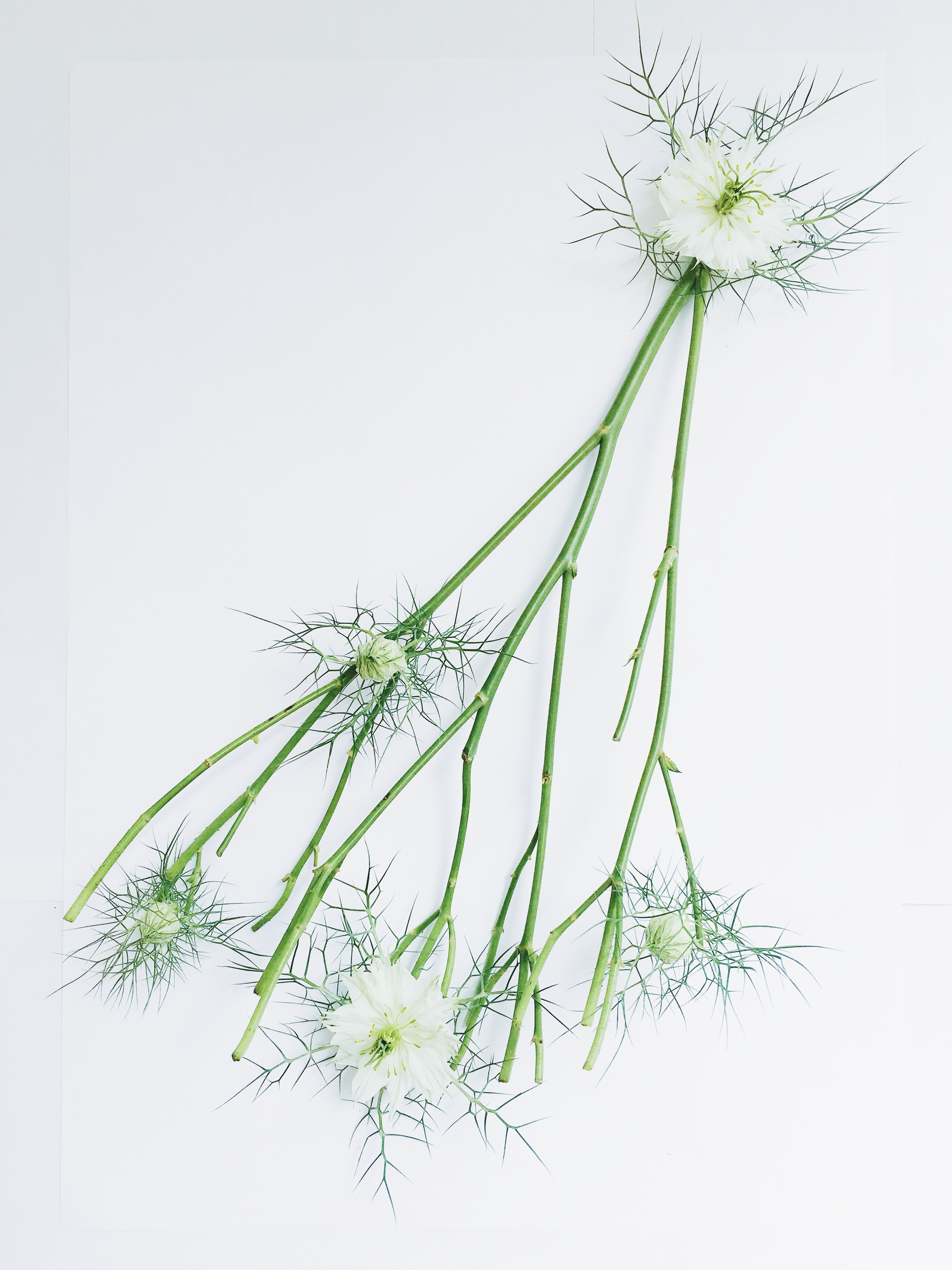 Cindy Lin Flower Drawing 5.3.jpg