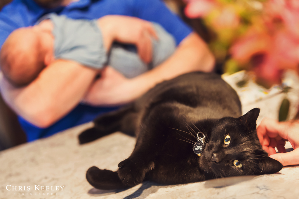 cat-in-family-photos-dover-new-hampshire.jpg