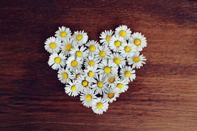 daisy-1403041_640.jpg