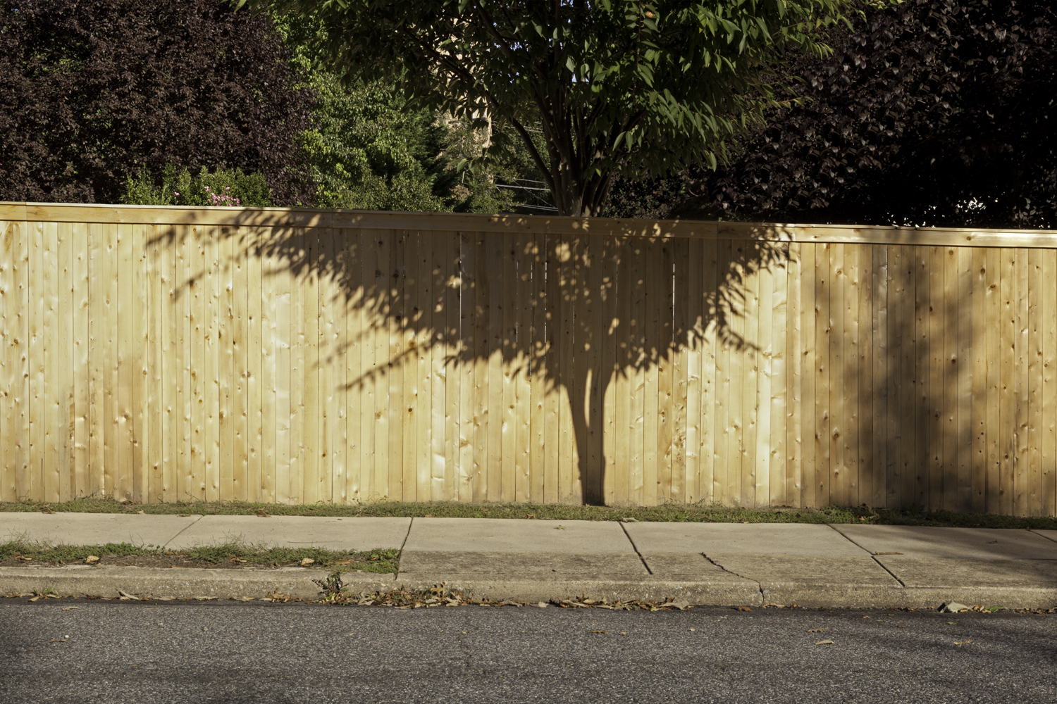 Double Take, 2013, archival pigment print on paper