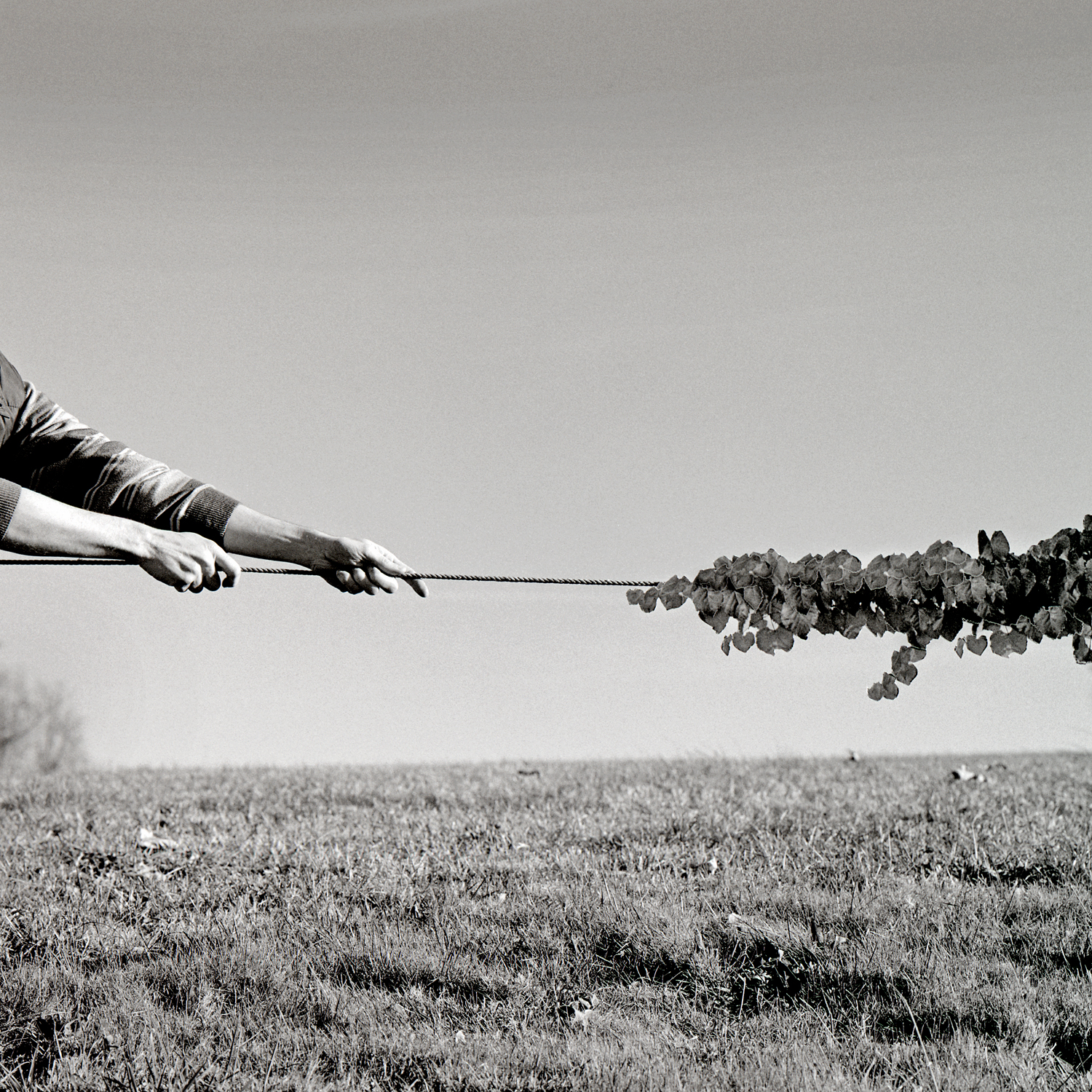 Tug of War, 2006, archival pigment print on paper