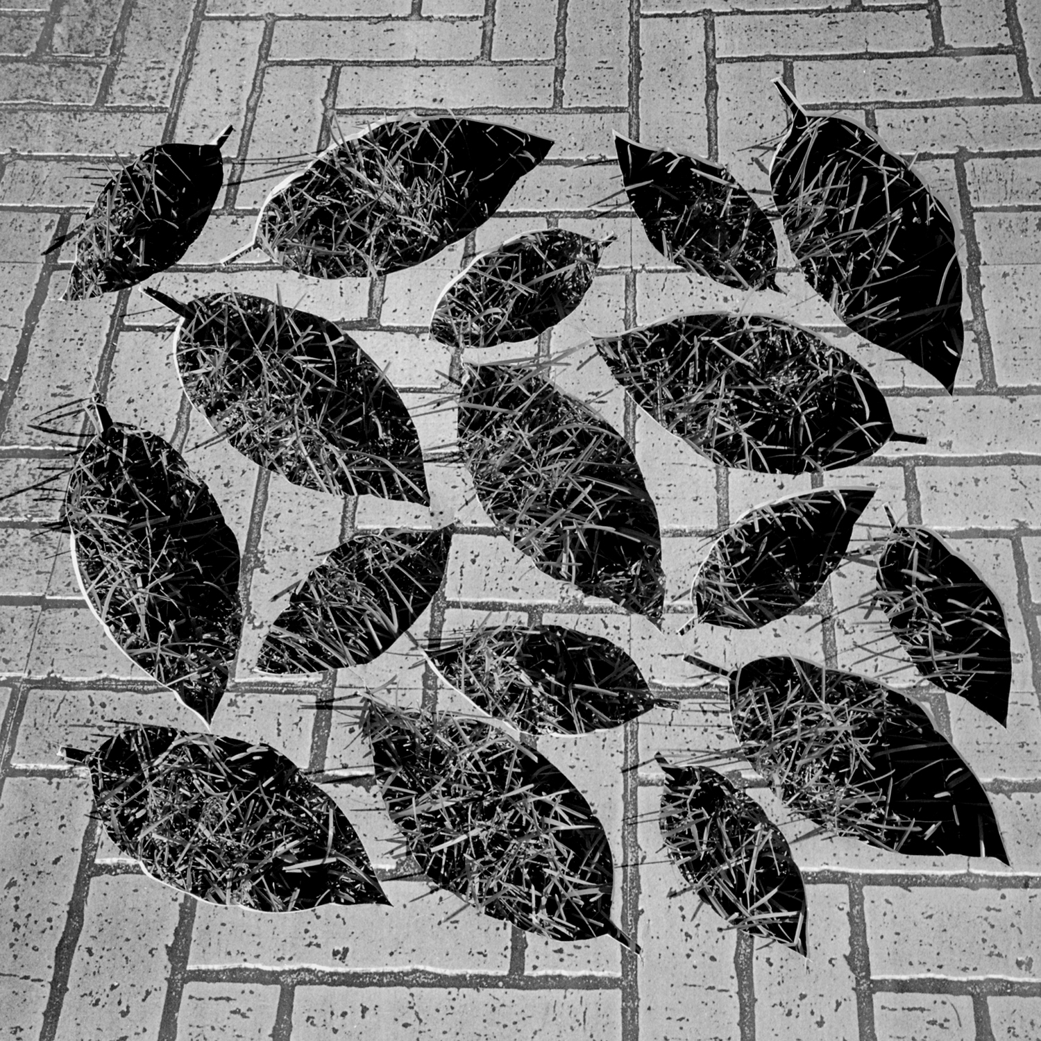 Leaves 2, 2005, archival pigment print on paper