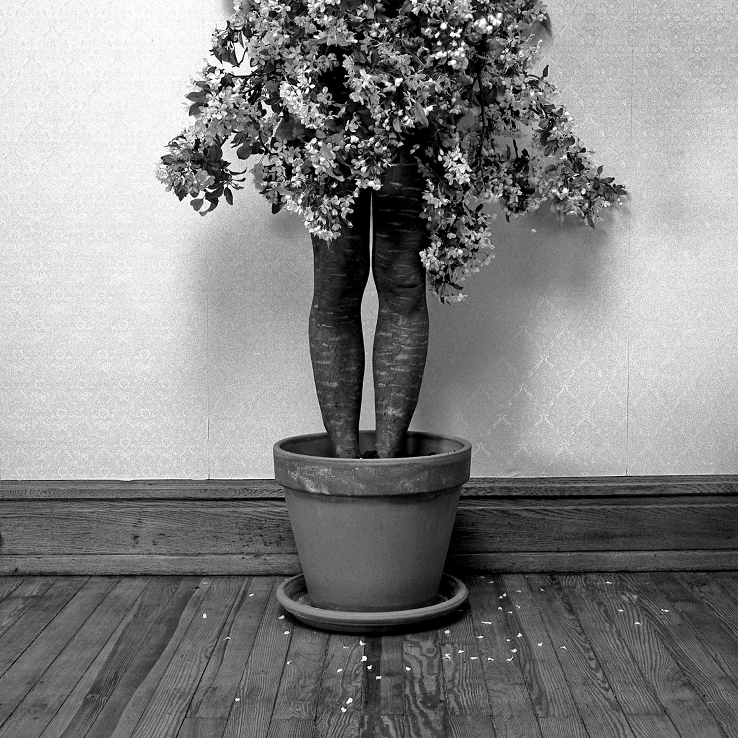 Potted, 2005, archival pigment print on paper