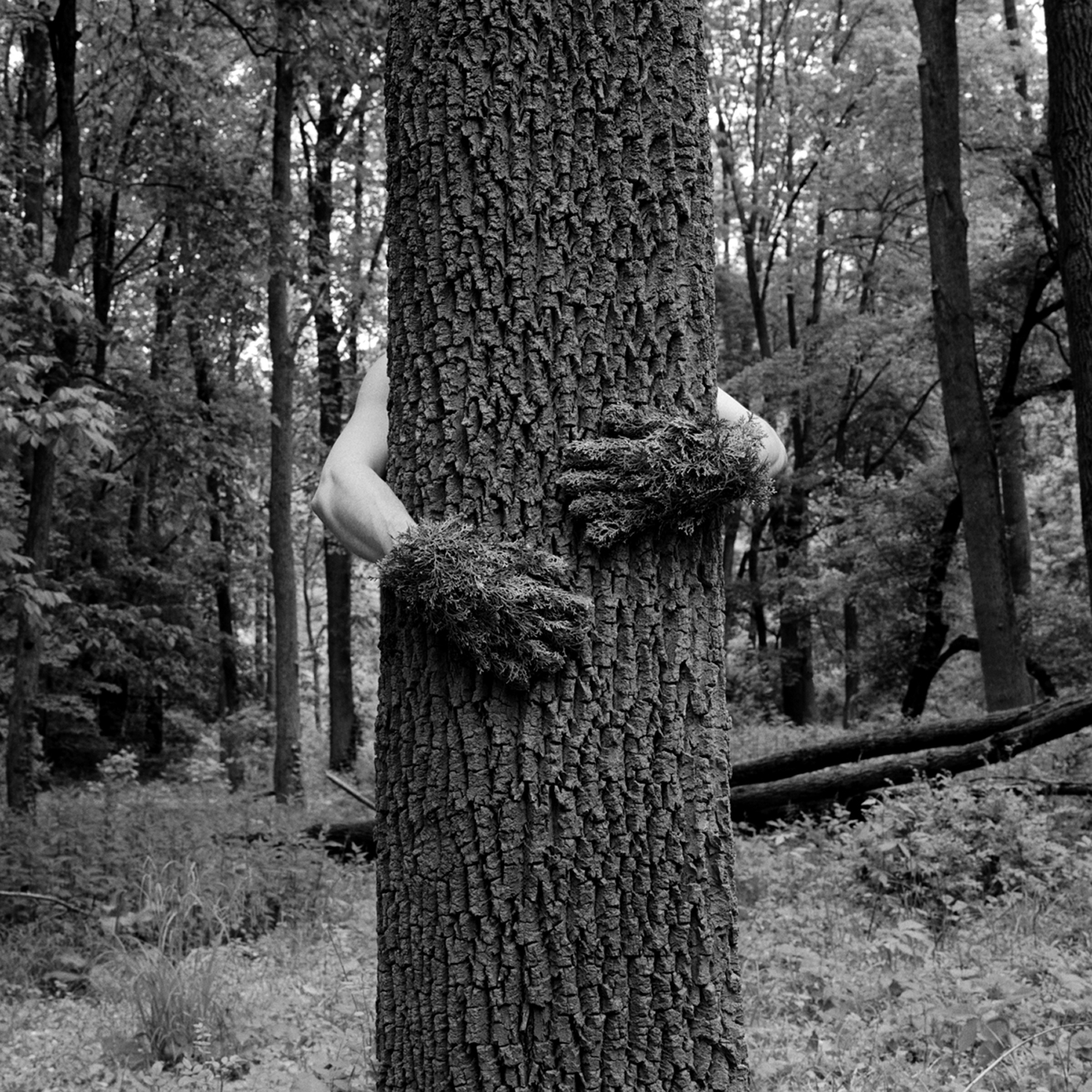 Tree Hug, 2005, archival pigment print on paper