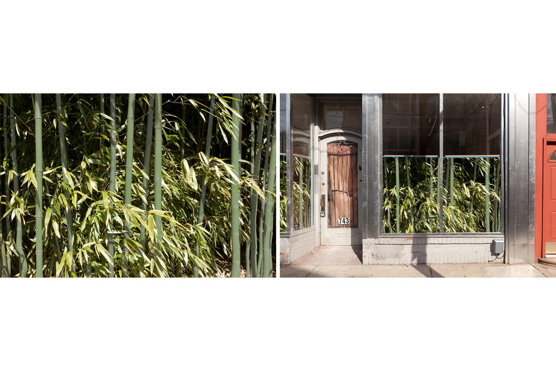 Bamboo, 2017, archival pigment print