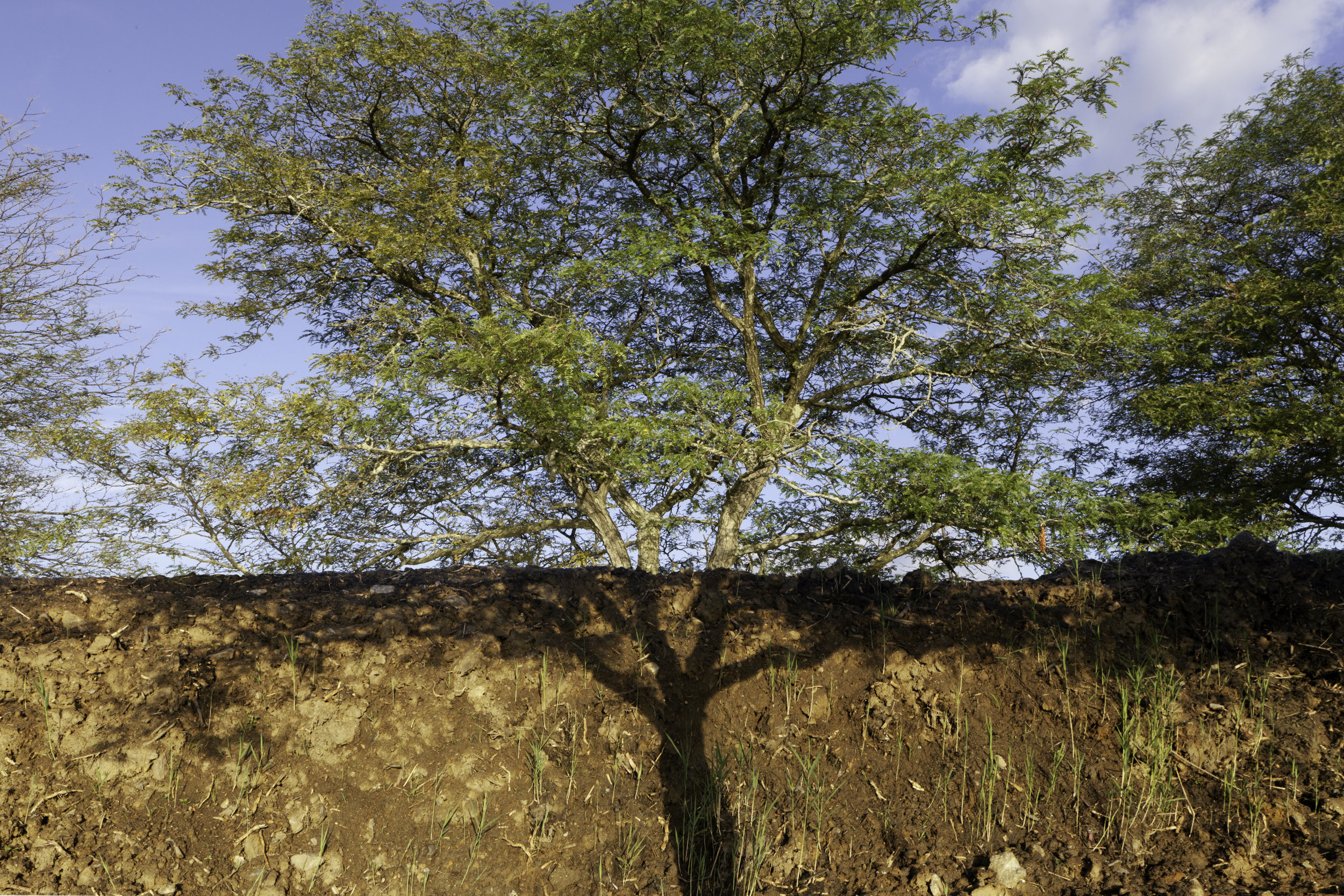 Tree and Shadow, 2018, archival pigment print