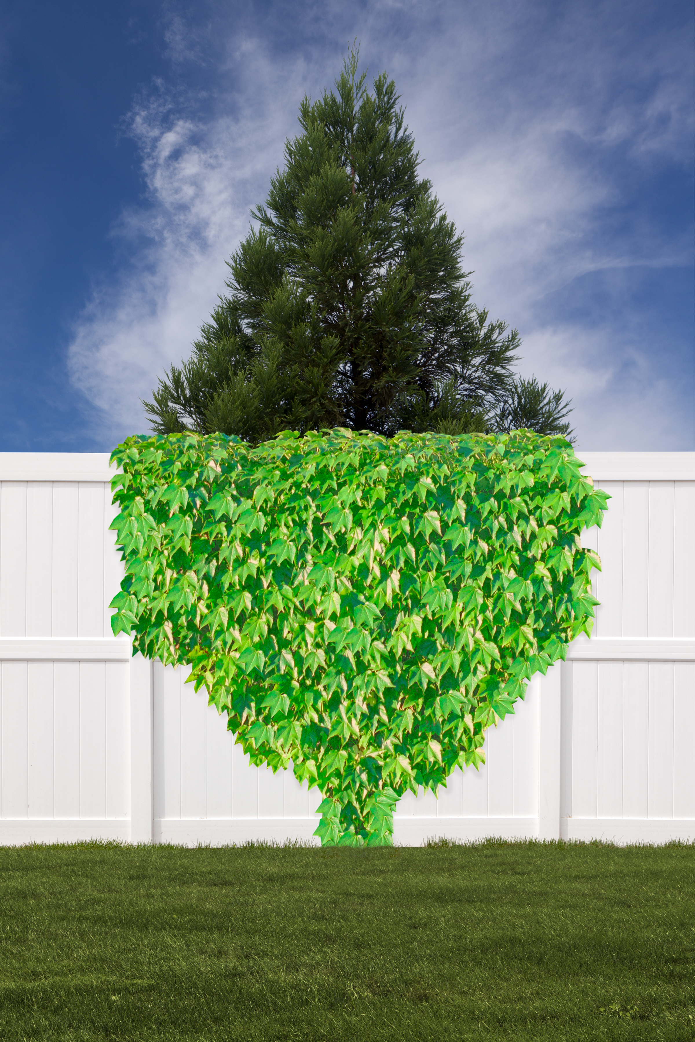 Tree, Fence, and Vine, 2018, archival pigment print