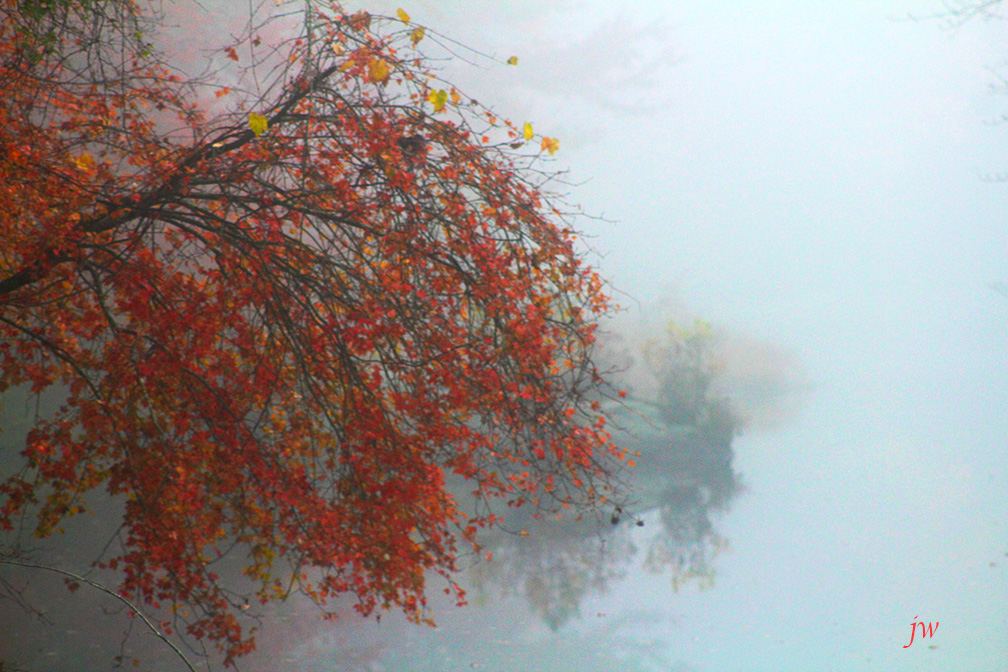autumn 2017 2.jpg