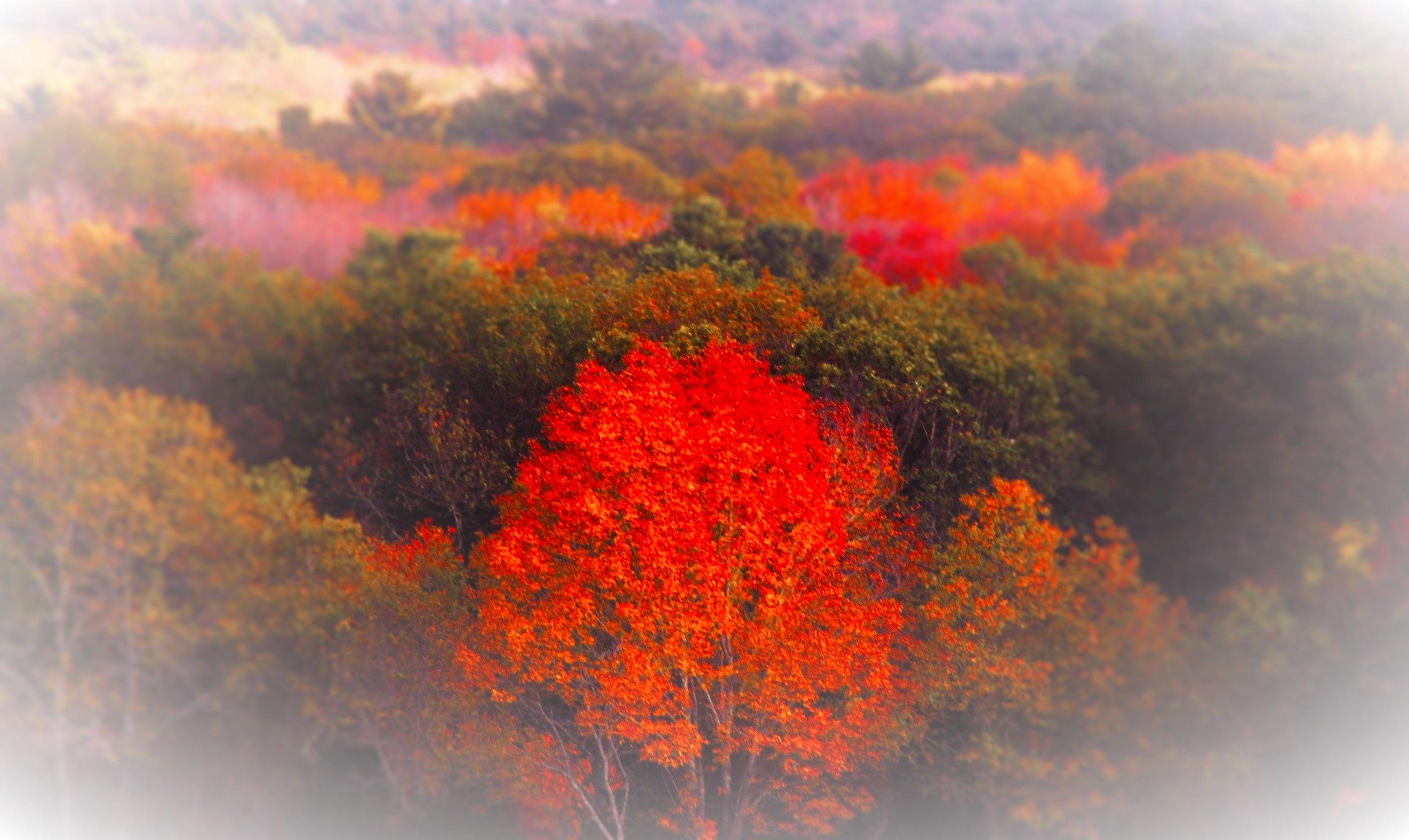 fall2016-28 (4).jpg
