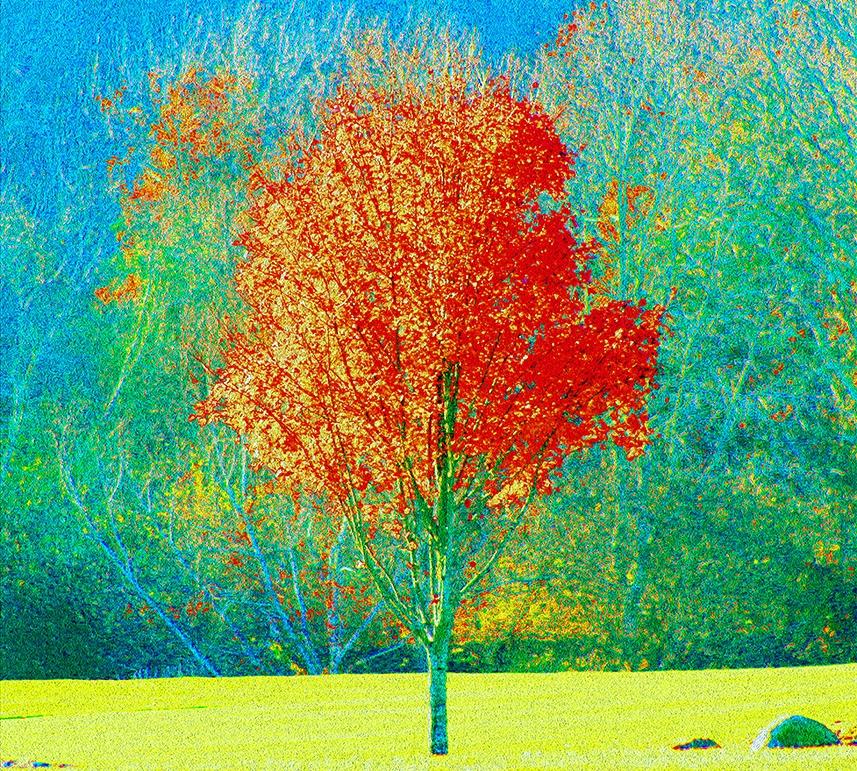 autumn tree website.jpg
