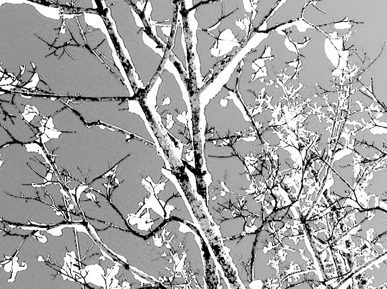 tree for website2.jpg
