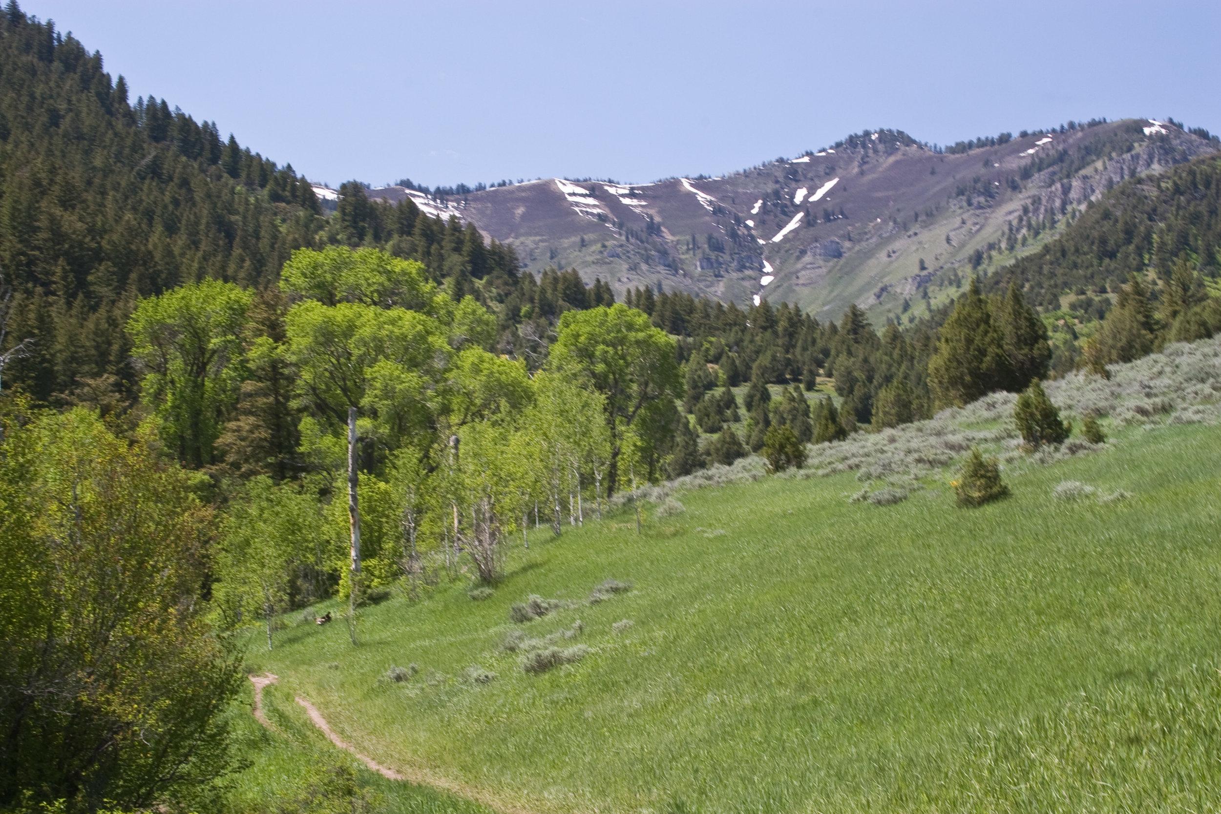 Spring Hike.jpg