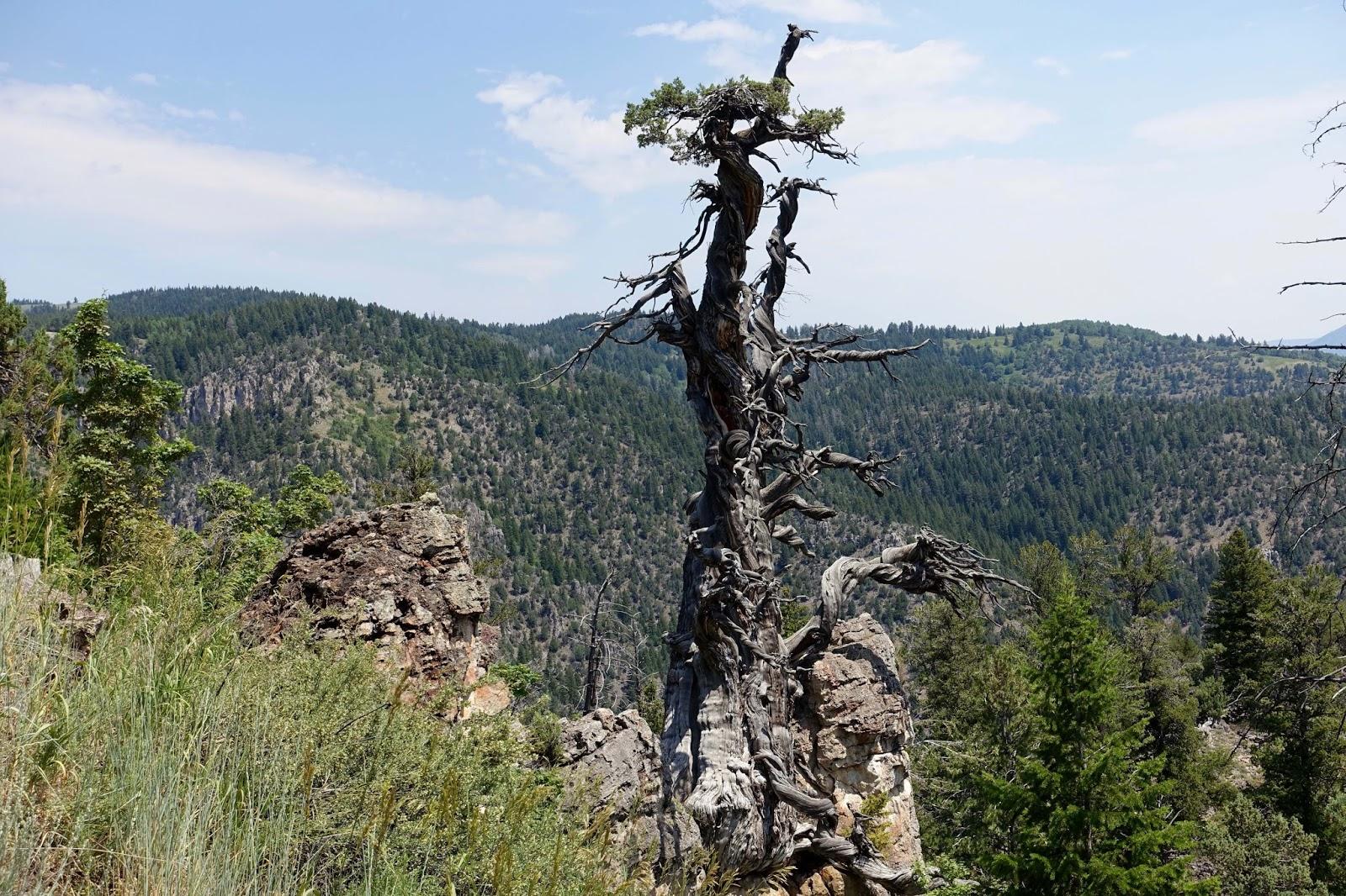 DSC03442.JPG Jardine, Logan Canyon copy.jpg