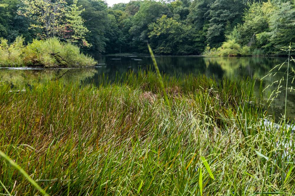 Moosetastic Pond at Weir Farm