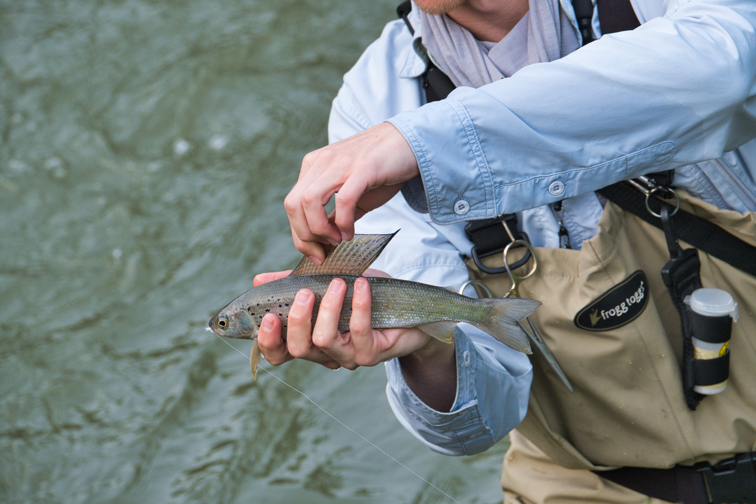 We watched this fly fisherman catching Grayling, with it's large dorsal fin