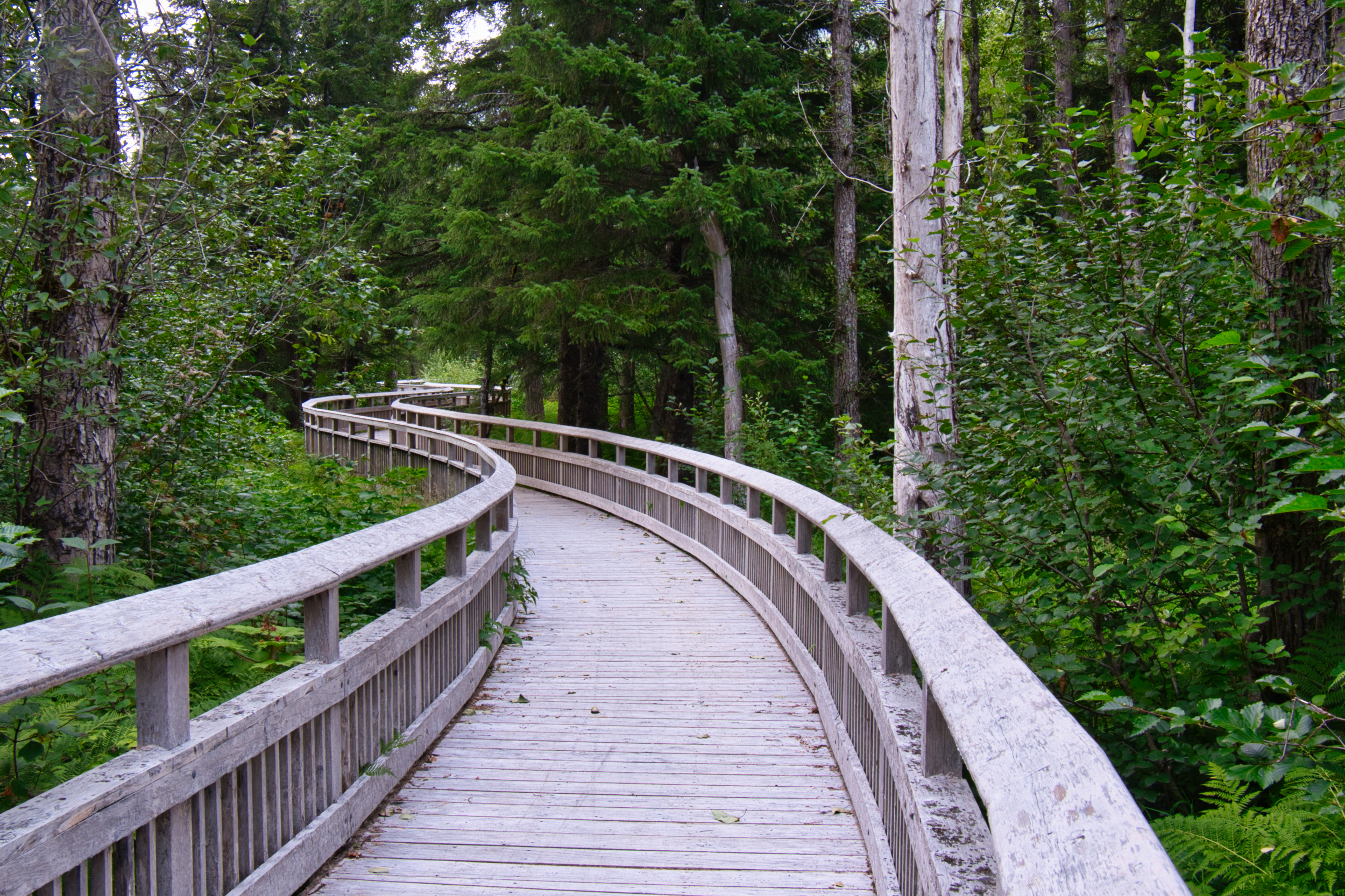 A section of the Blue Ice Trail near Portage Glacier was a raised boardwalk through the forest. Really nice.