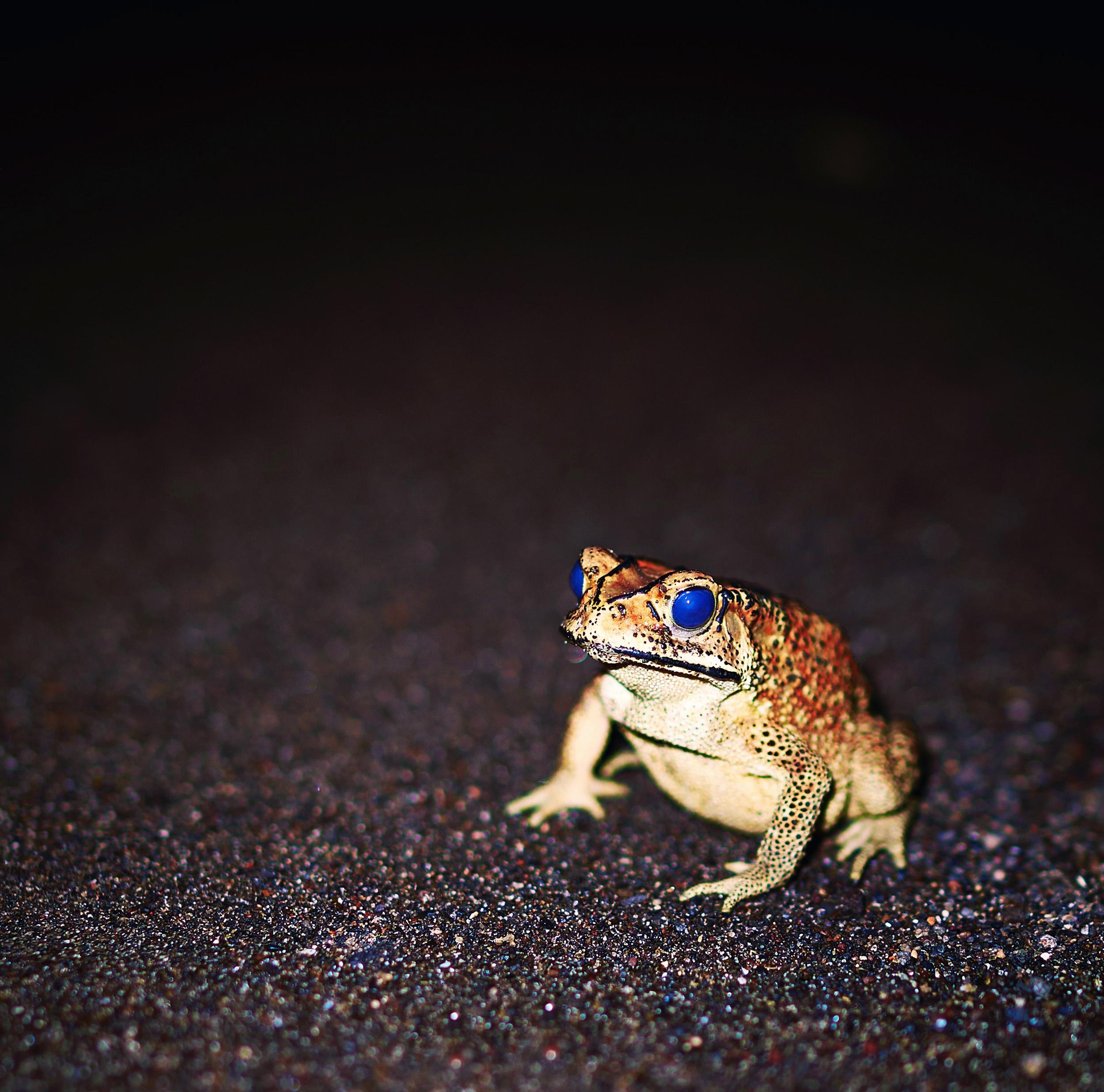 Nightfrog