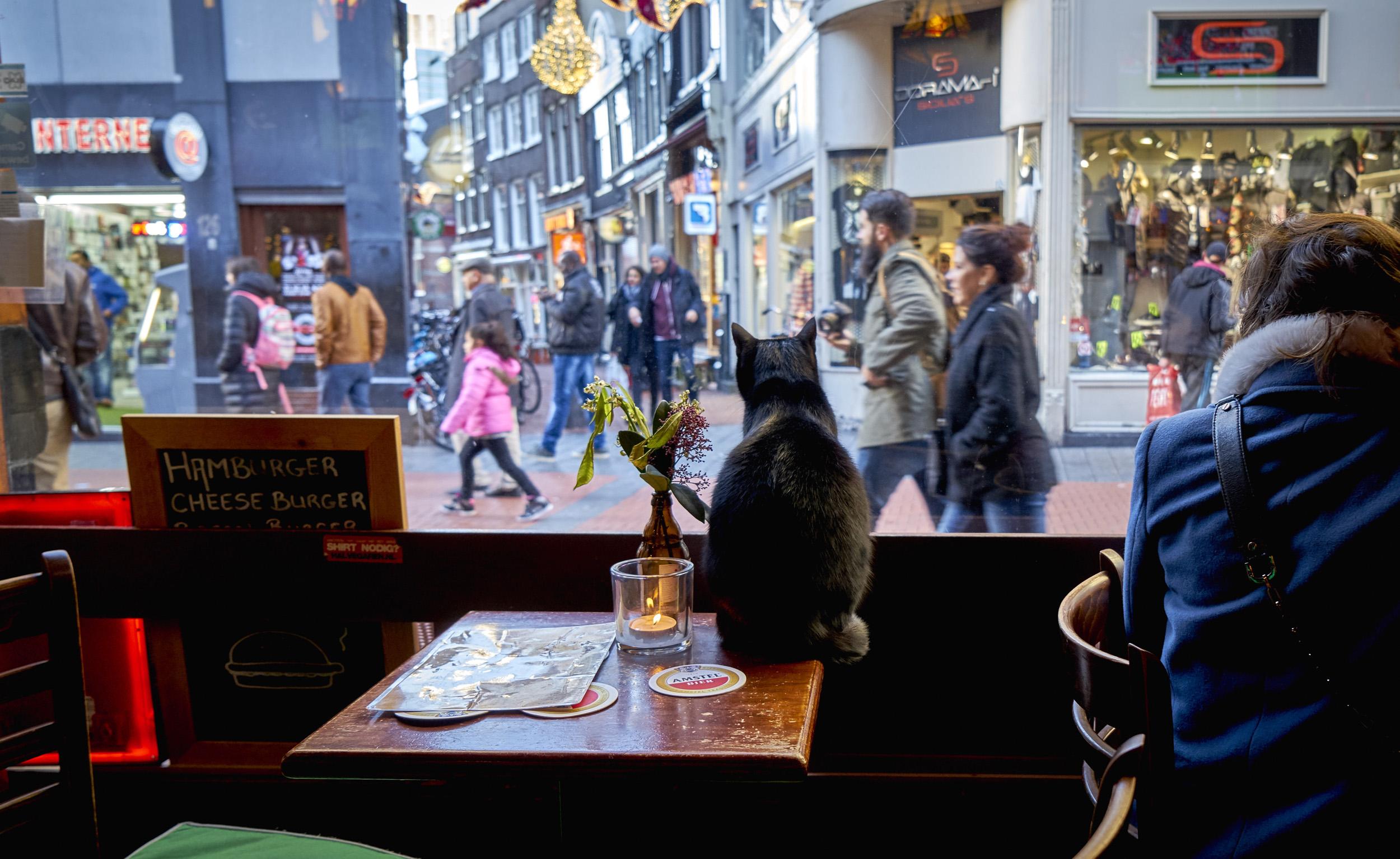 Amsterdam Cat in a Pub